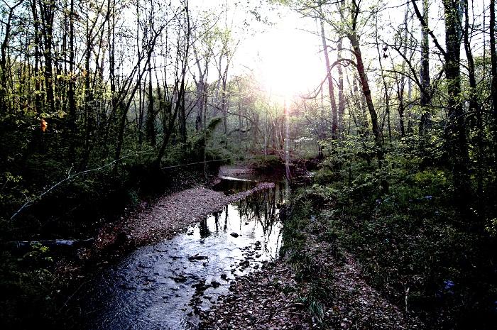 Creek, woods