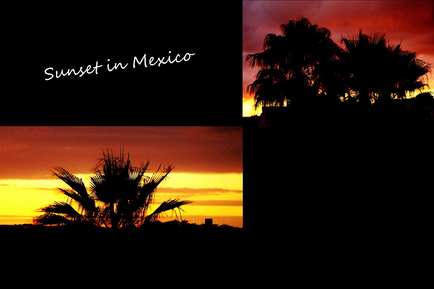sunset in mexico palm trees