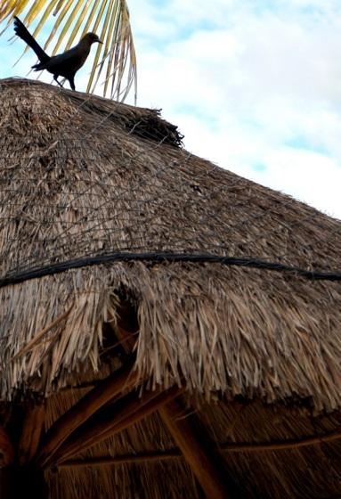 bird on a cabana