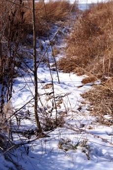 winter path 1