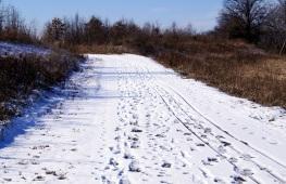 winter path 2