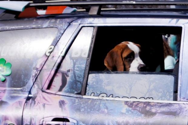 dog ride 1 offshoots12.com