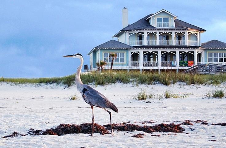 gulf bird offshoots12.com