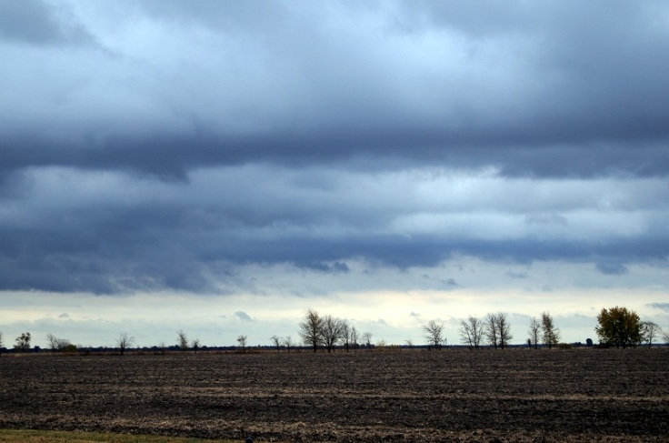 IL farmland http://offshoots12.com