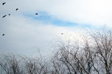 winter birds http://offshoots12.com
