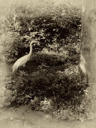 Bird MM http://offshoots12.com