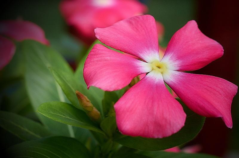 final bloom http://offshoots12.com