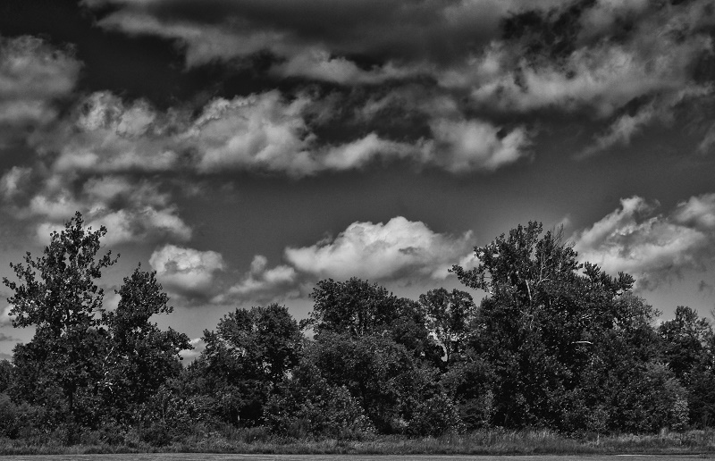 bw trees http://offshoots12.com