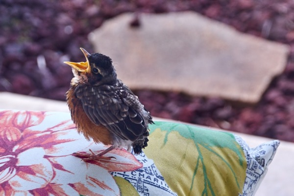 birdie 1