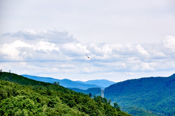 mountain bird 01