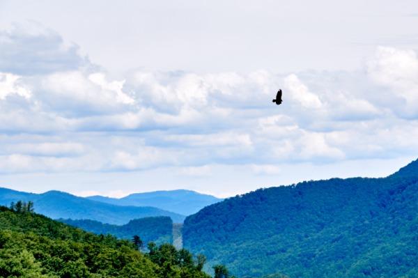 mountain bird 02