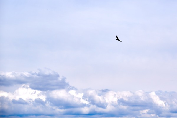 mountain bird 03