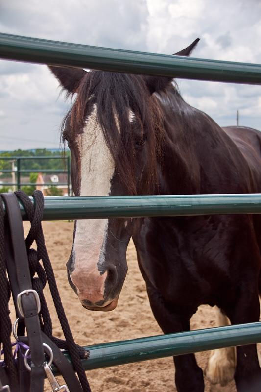 Horses 04