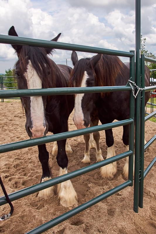 Horses 06