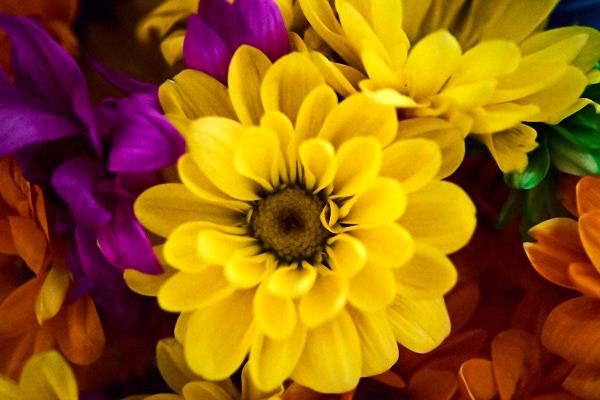 daisies 01