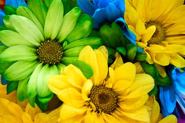 daisies 02