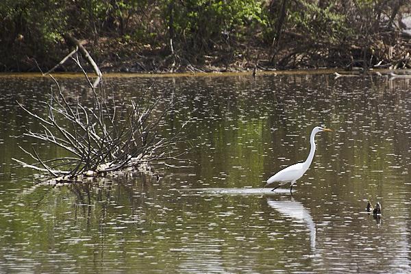swamp 15