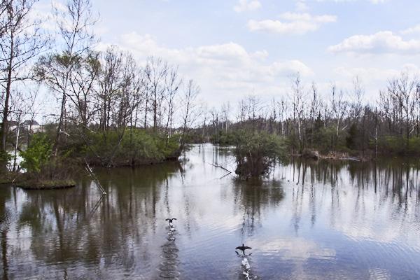 swamp 03