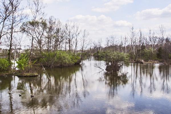 swamp 06