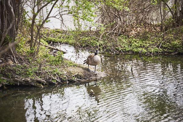 swamp 07